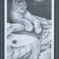 Untitled (Mountain Lion)