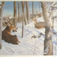 Untitled (Deer laying in snow)