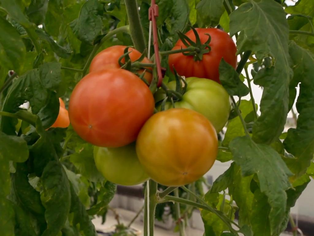 Hydroponic Garden Yields Vegetables and Inspiration